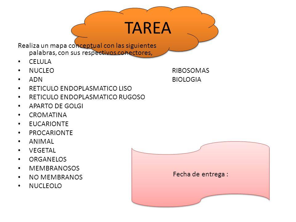 TAREA Realiza un mapa conceptual con las siguientes palabras, con sus respectivos conectores, CELULA.