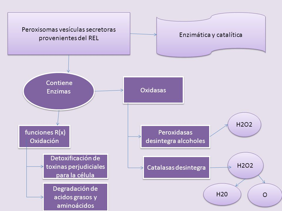 Peroxisomas vesículas secretoras provenientes del REL