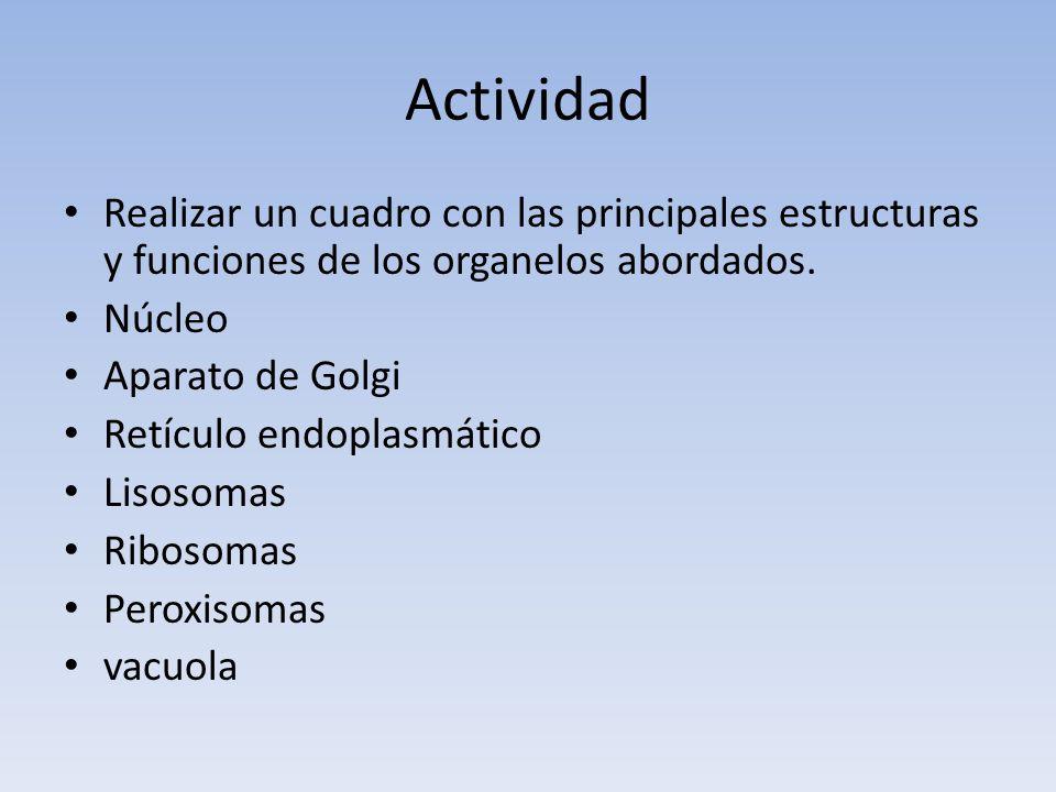 Actividad Realizar un cuadro con las principales estructuras y funciones de los organelos abordados.