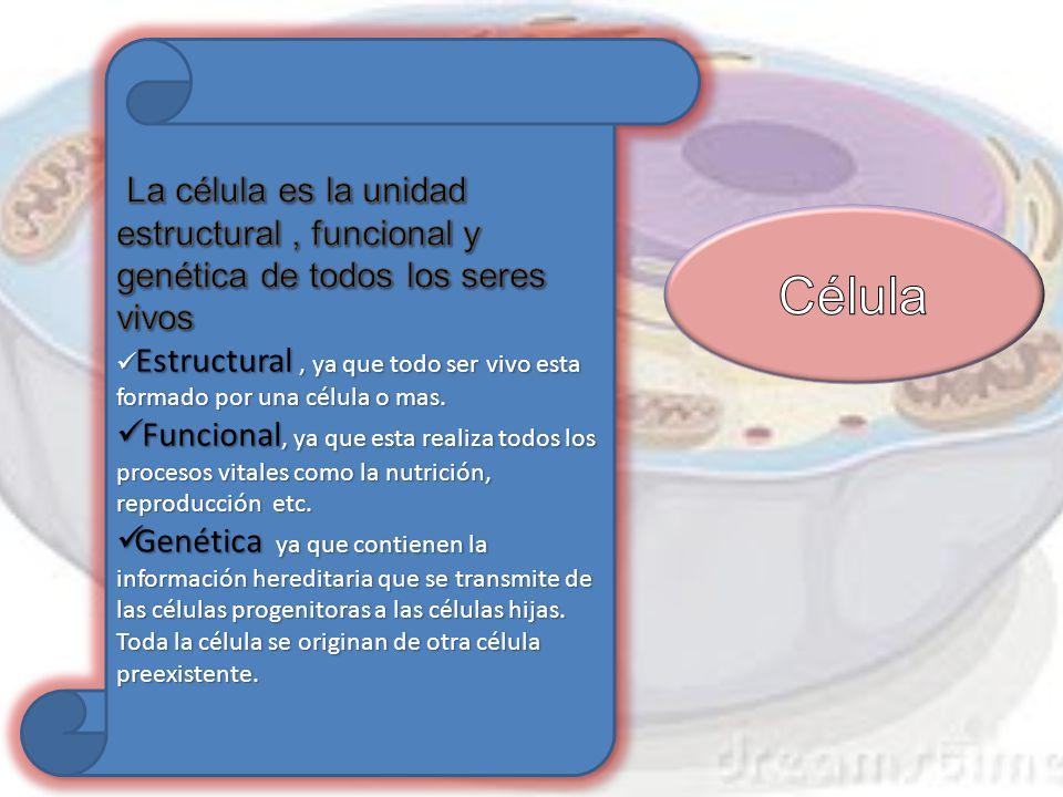 La célula es la unidad estructural , funcional y genética de todos los seres vivos