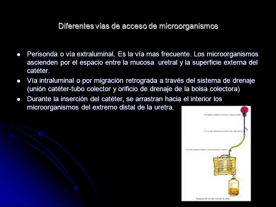 Diferentes vías de acceso de microorganismos