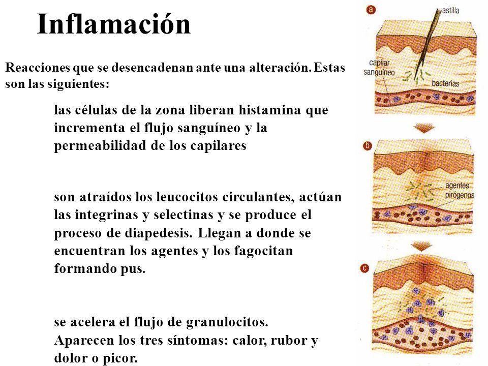 Inflamación Reacciones que se desencadenan ante una alteración. Estas son las siguientes:
