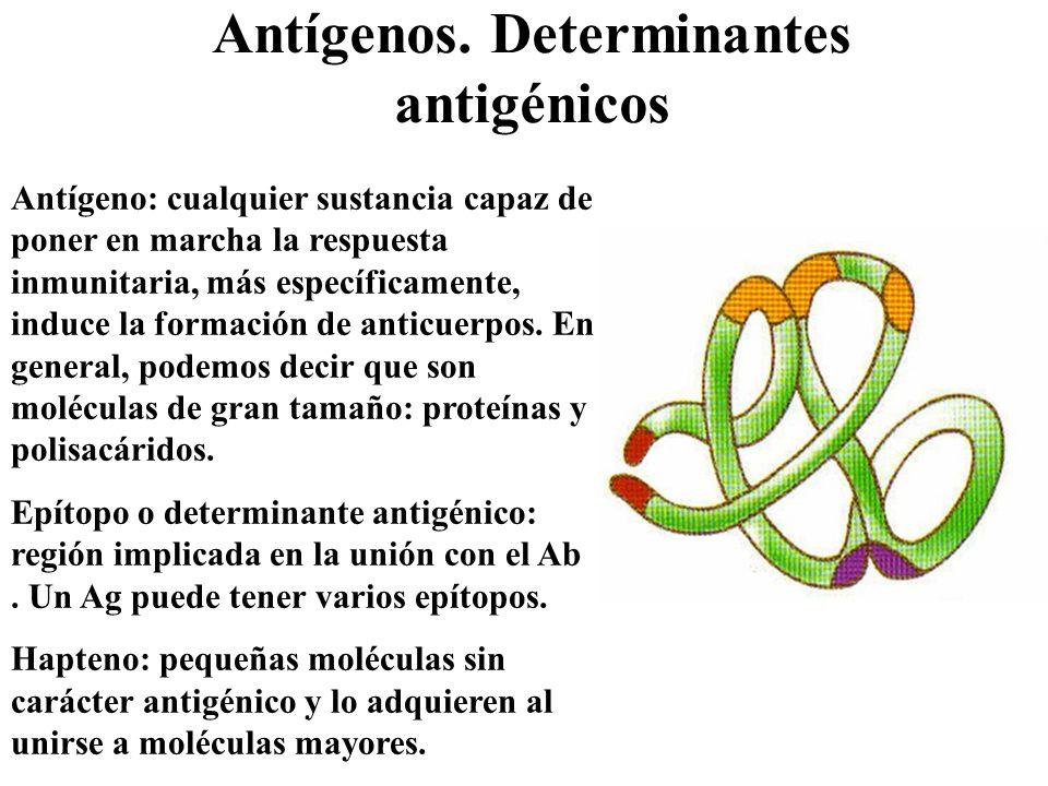 Antígenos. Determinantes antigénicos