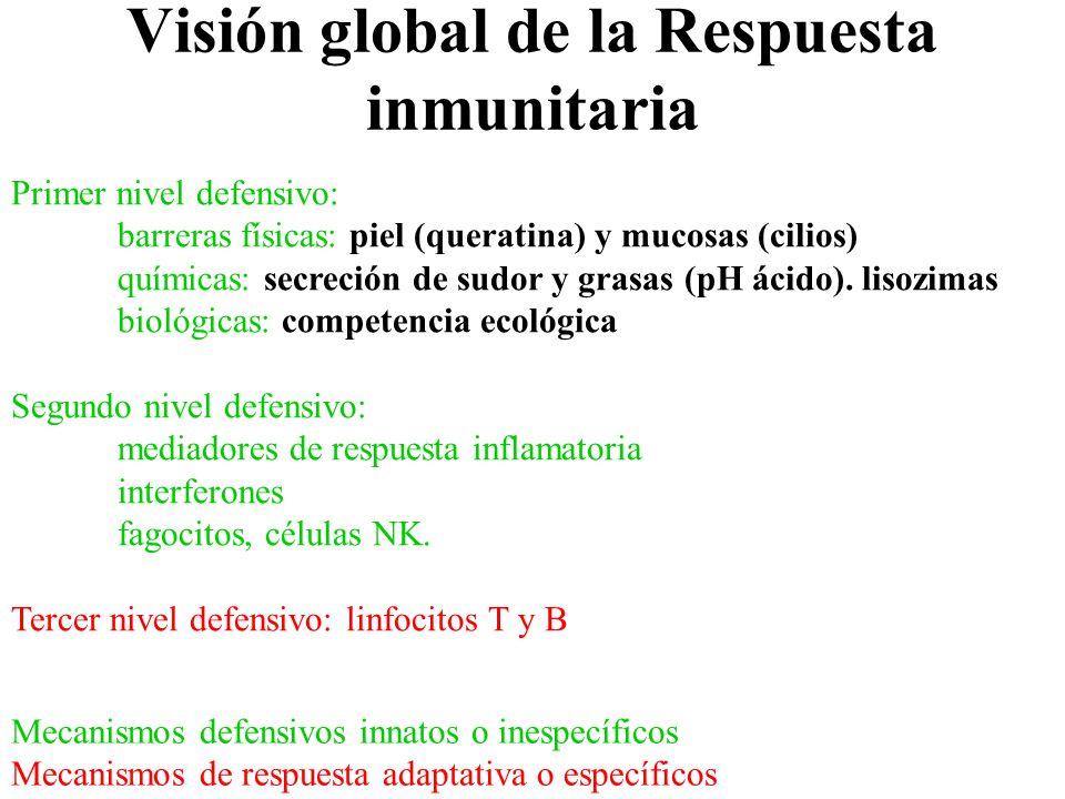 Visión global de la Respuesta inmunitaria