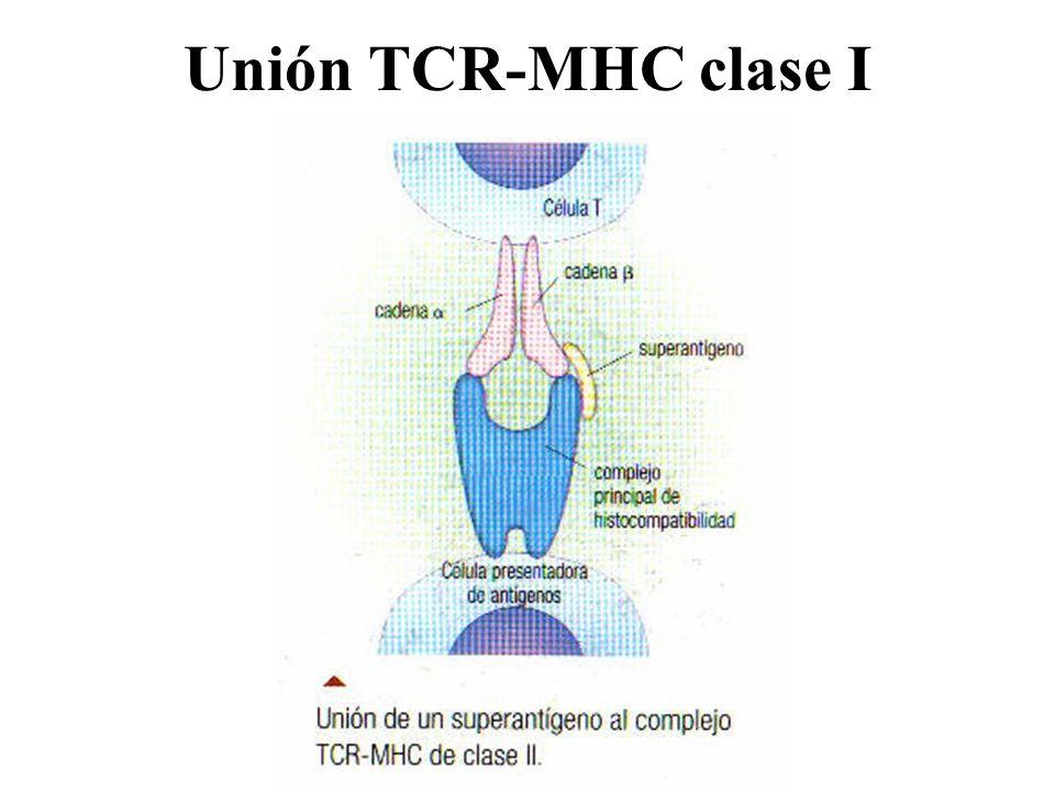 Unión TCR-MHC clase I