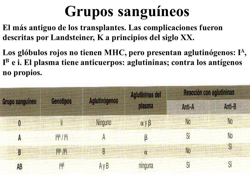 Grupos sanguíneos El más antiguo de los transplantes. Las complicaciones fueron descritas por Landsteiner, K a principios del siglo XX.