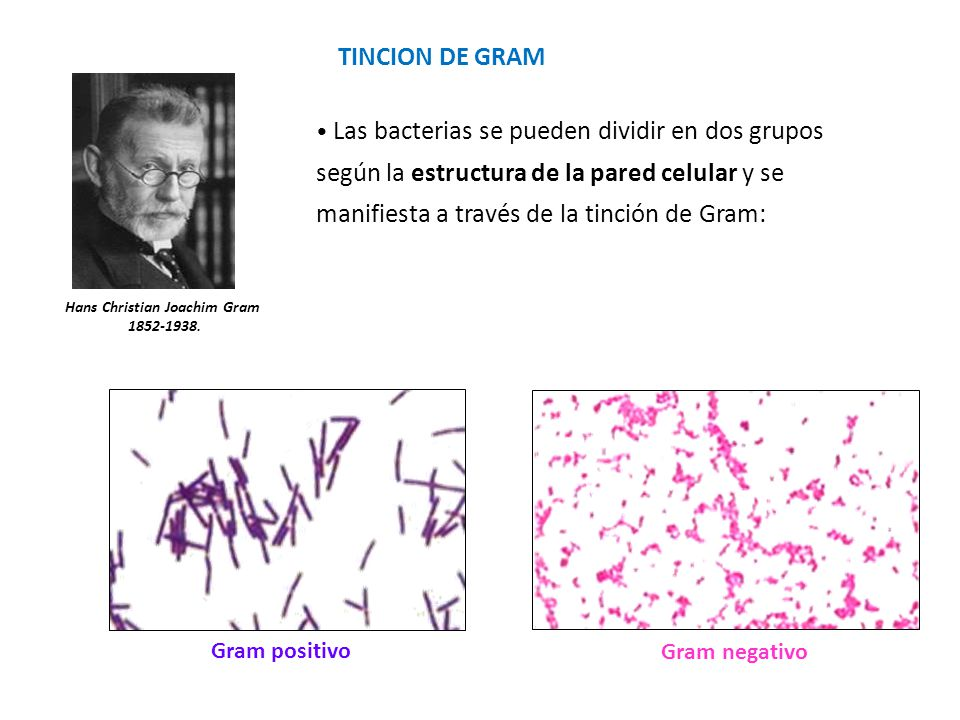 hans christian gram In 1884 hans christian gram, a danish bacteriologist, developed his special stain, which is composed of iodine and potassium iodide-arsenite after preliminary.