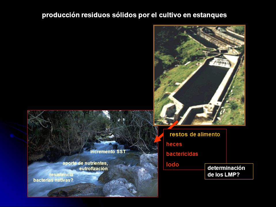 Curso de biolog a acu tica blg r mulo loayza aguilar for Produccion de peces en estanques