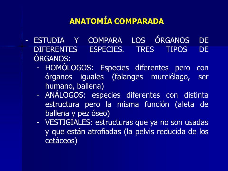 Famoso Ppt Anatomía Comparada Cresta - Imágenes de Anatomía Humana ...