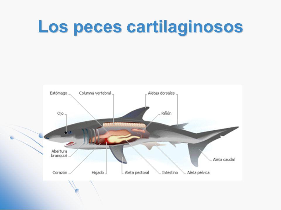 Contemporáneo Anatomía Externa De Los Peces óseos Friso - Anatomía ...