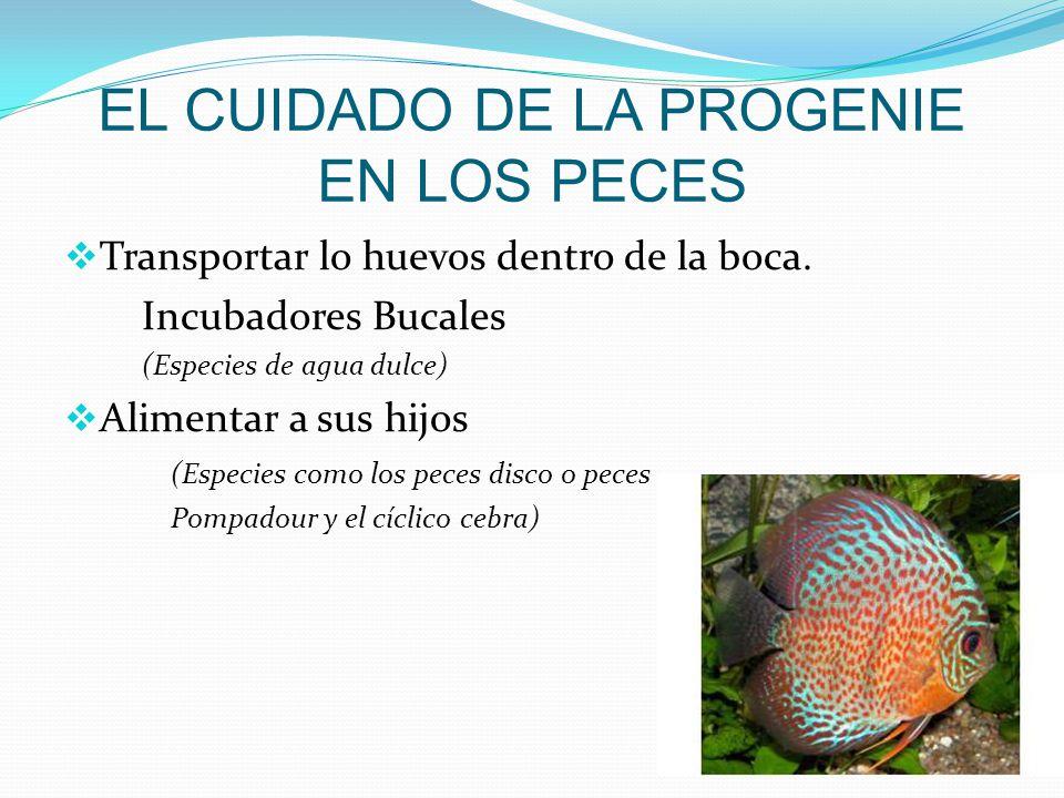 Cuidado parentales ppt descargar for Cuidado de peces