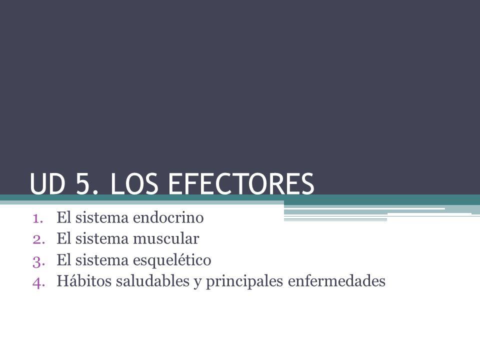 UD 5. LOS EFECTORES El sistema endocrino El sistema muscular