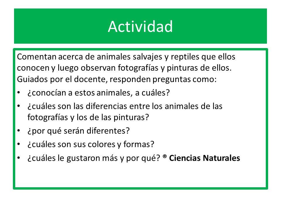 Animales animales salvajes salvajes 1 b sico ppt descargar for Diferencia entre licencia de apertura y licencia de actividad