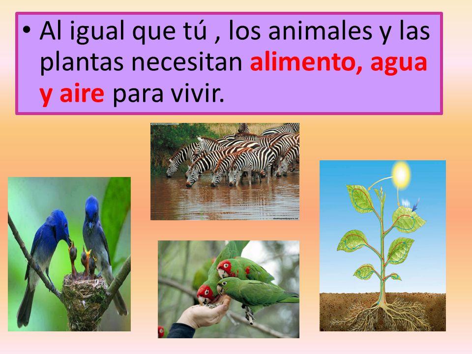Al igual que tú , los animales y las plantas necesitan alimento, agua y aire para vivir.