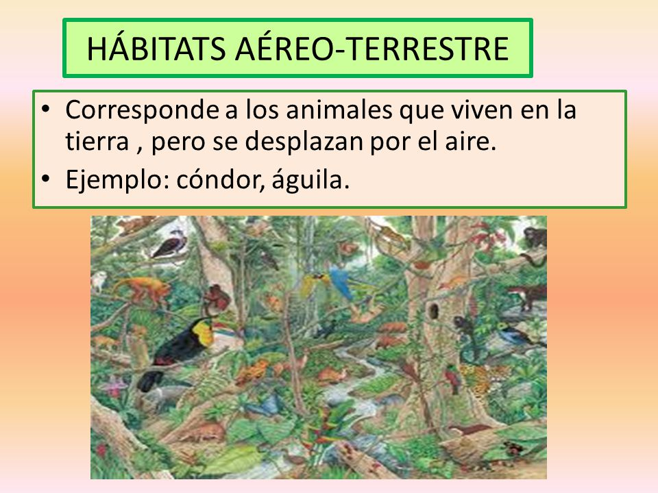 HÁBITATS AÉREO-TERRESTRE