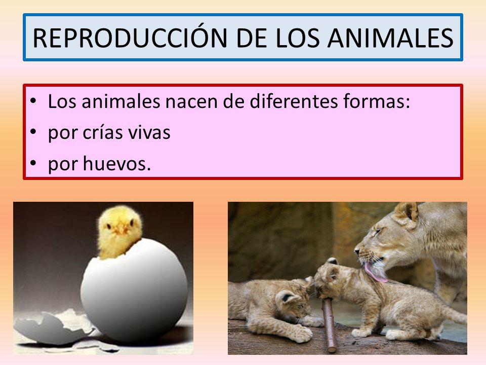REPRODUCCIÓN DE LOS ANIMALES