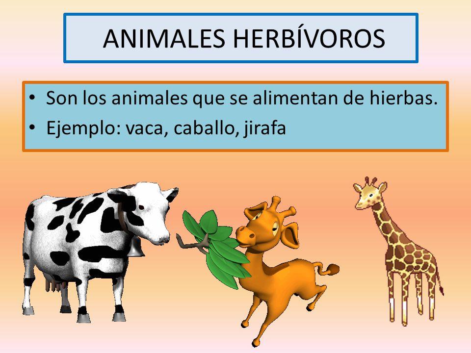 ANIMALES HERBÍVOROS Son los animales que se alimentan de hierbas.