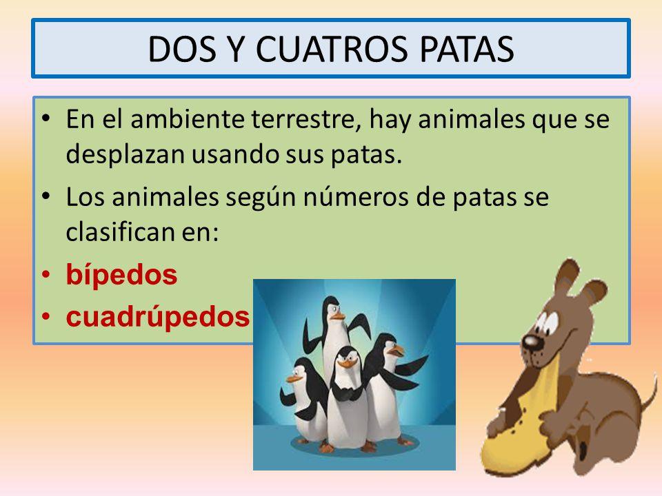 DOS Y CUATROS PATAS En el ambiente terrestre, hay animales que se desplazan usando sus patas. Los animales según números de patas se clasifican en: