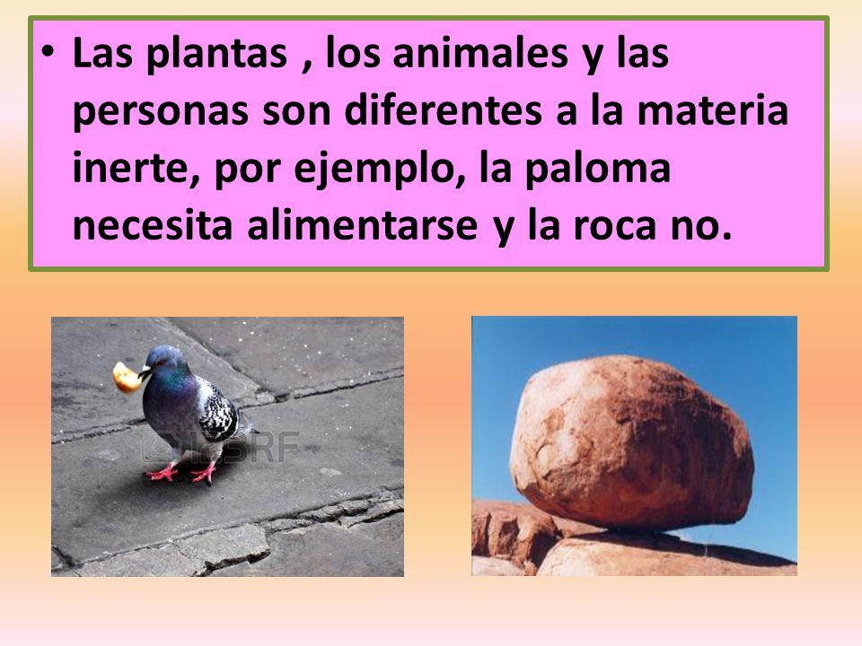 Las plantas , los animales y las personas son diferentes a la materia inerte, por ejemplo, la paloma necesita alimentarse y la roca no.