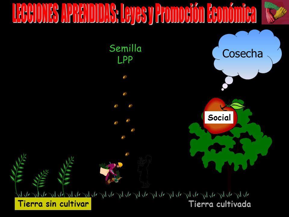LECCIONES APRENDIDAS: Leyes y Promoción Económica