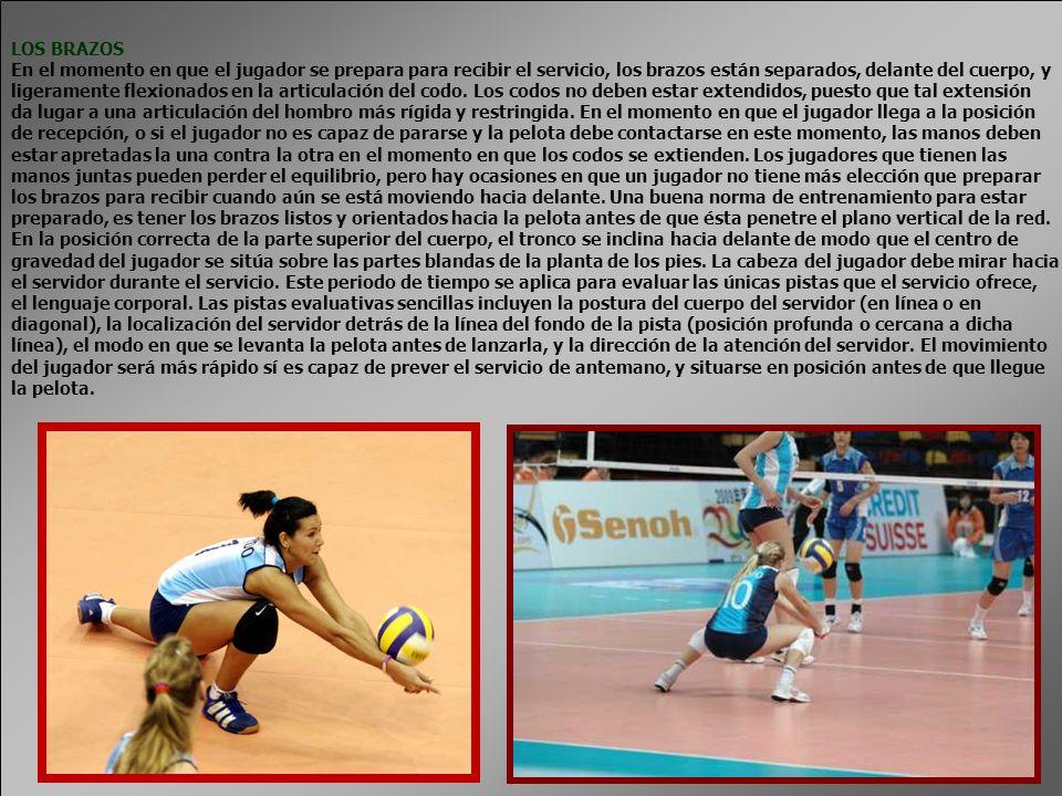 LOS BRAZOS En el momento en que el jugador se prepara para recibir el servicio, los brazos están separados, delante del cuerpo, y.