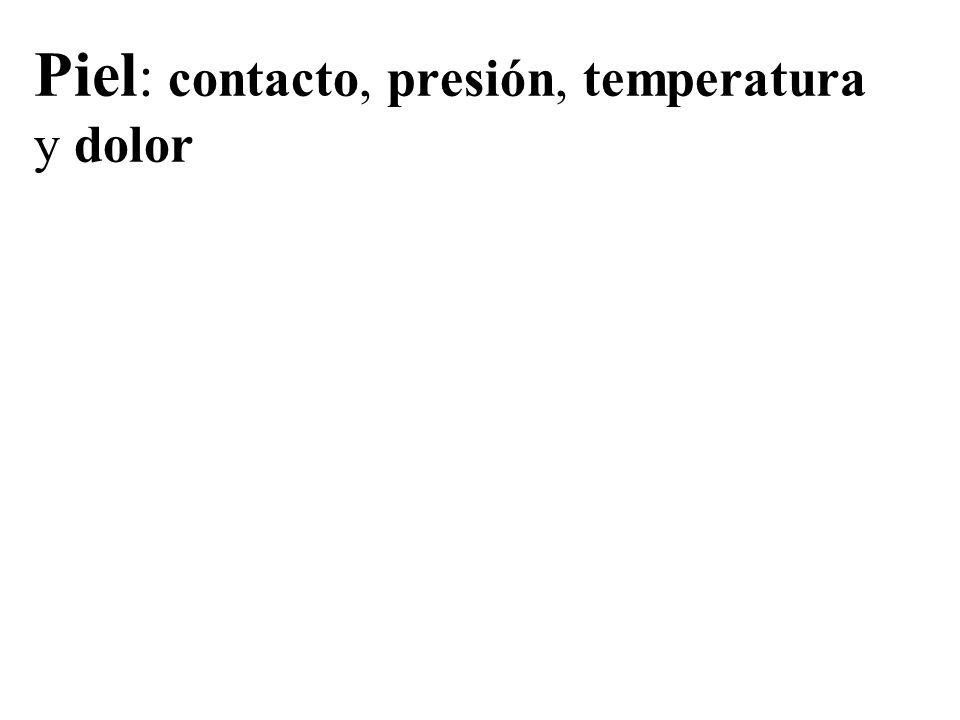 Piel: contacto, presión, temperatura y dolor