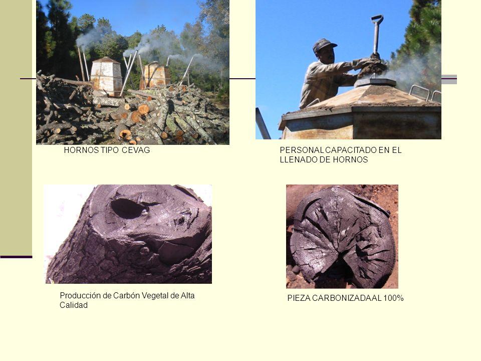 HORNOS TIPO CEVAGPERSONAL CAPACITADO EN EL LLENADO DE HORNOS. Producción de Carbón Vegetal de Alta Calidad.
