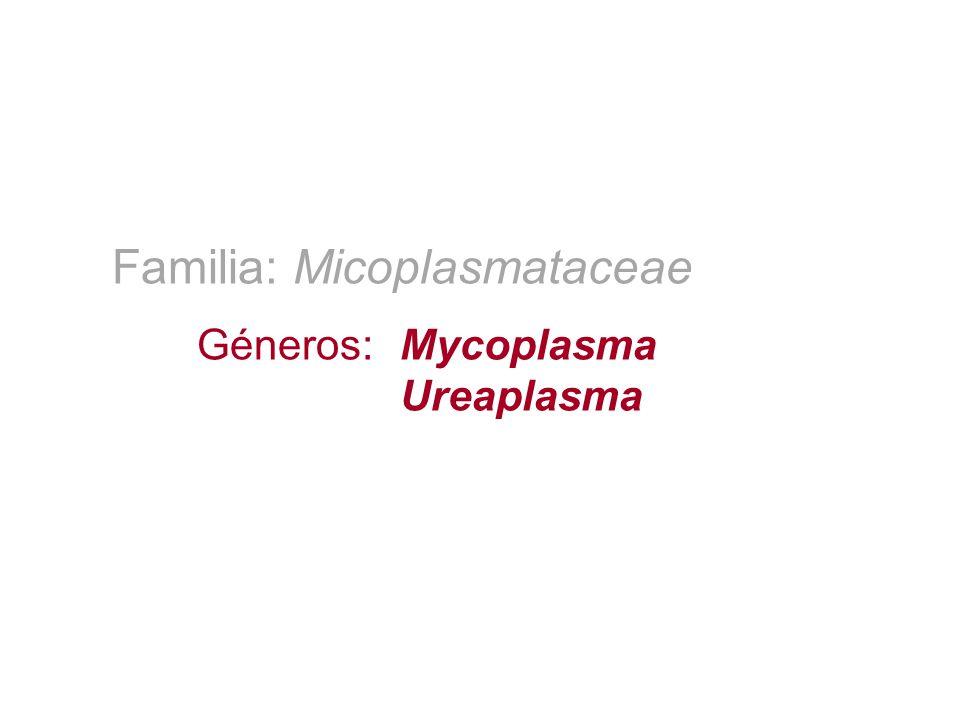Familia: Micoplasmataceae