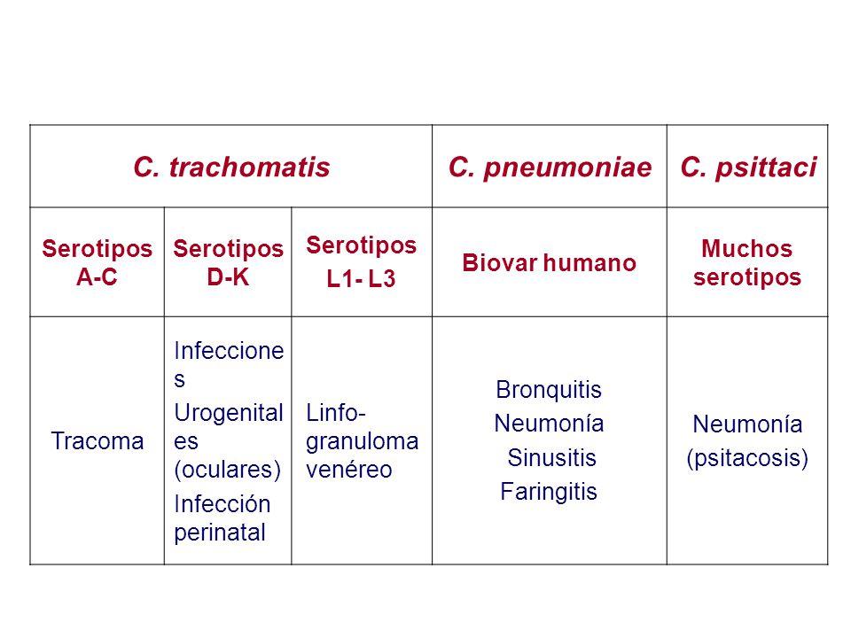 C. trachomatis C. pneumoniae C. psittaci