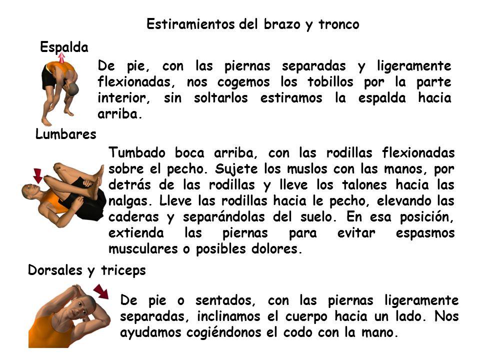 Estiramientos del brazo y tronco