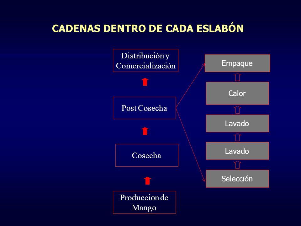 CADENAS DENTRO DE CADA ESLABÓN