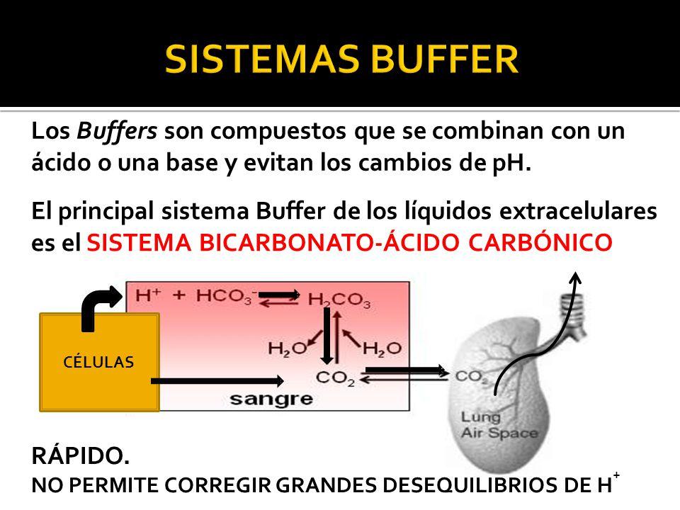 SISTEMAS BUFFER Los Buffers son compuestos que se combinan con un ácido o una base y evitan los cambios de pH.