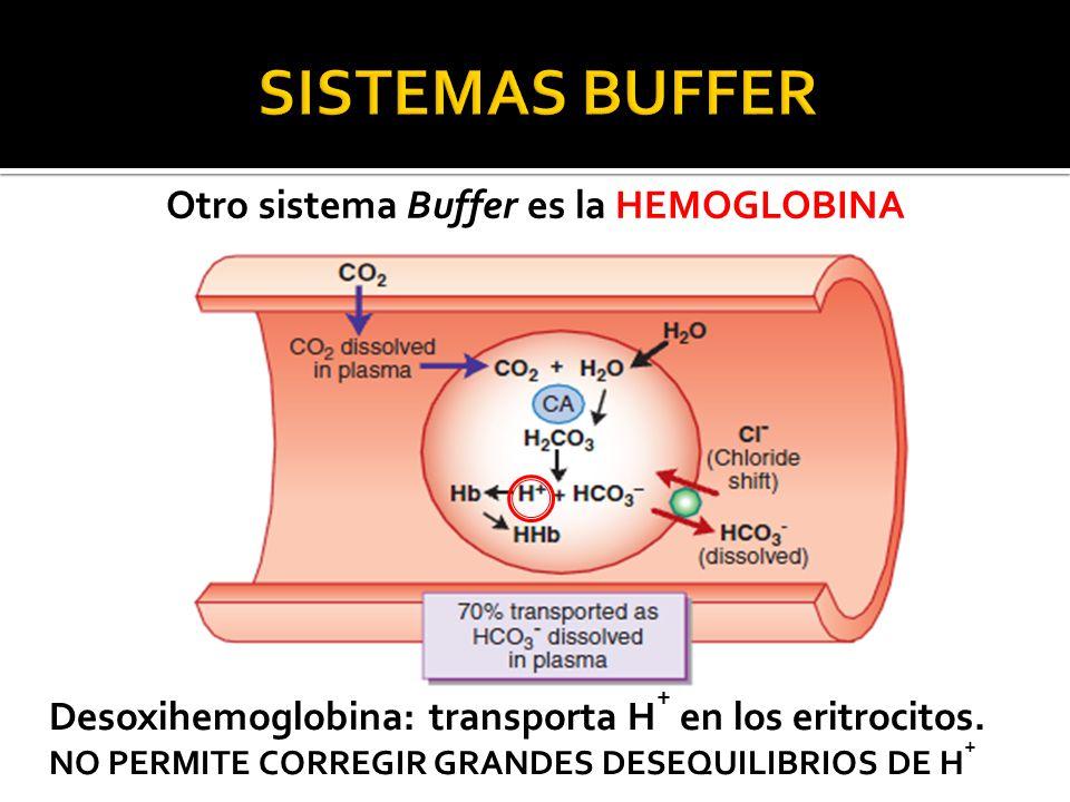 Otro sistema Buffer es la HEMOGLOBINA