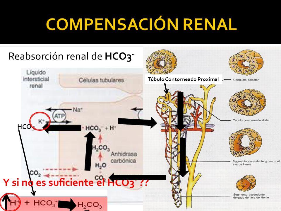 COMPENSACIÓN RENAL Reabsorción renal de HCO3-