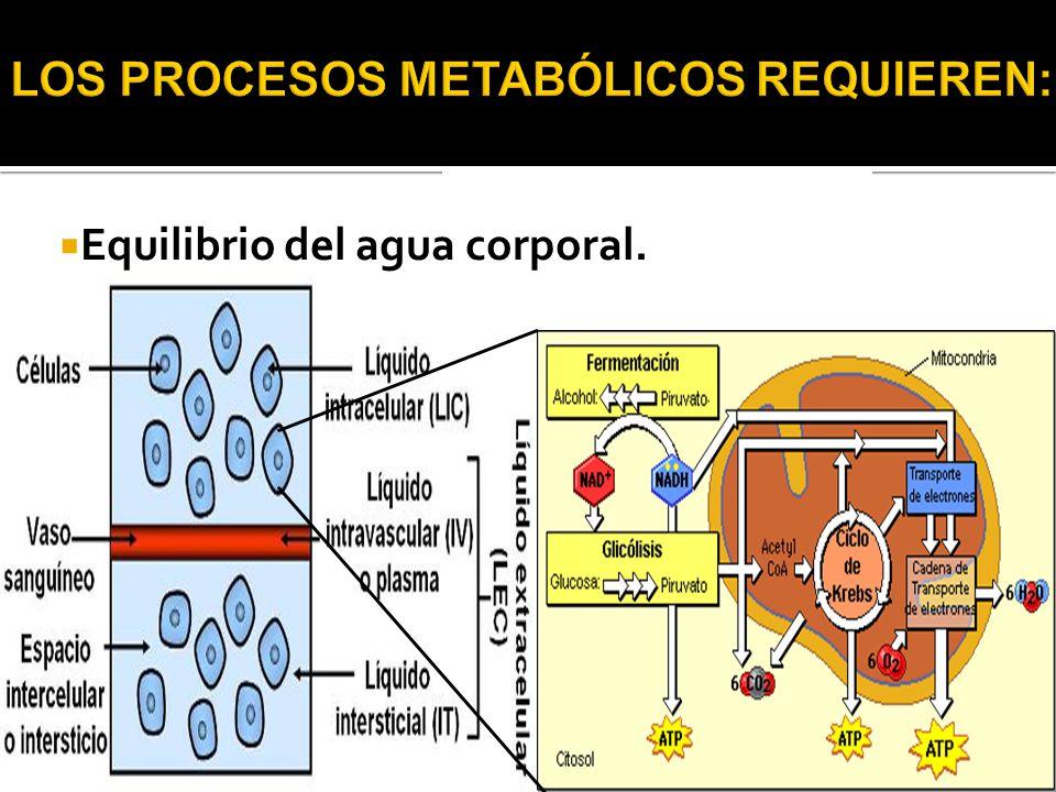 LOS PROCESOS METABÓLICOS REQUIEREN: