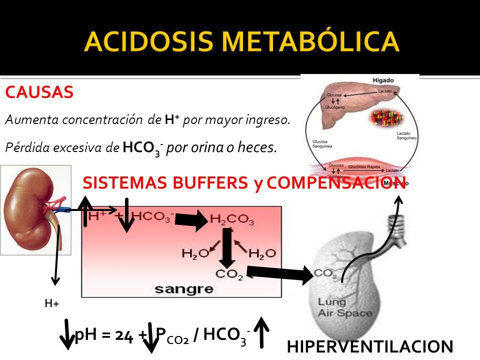 ACIDOSIS METABÓLICA CAUSAS SISTEMAS BUFFERS y COMPENSACION