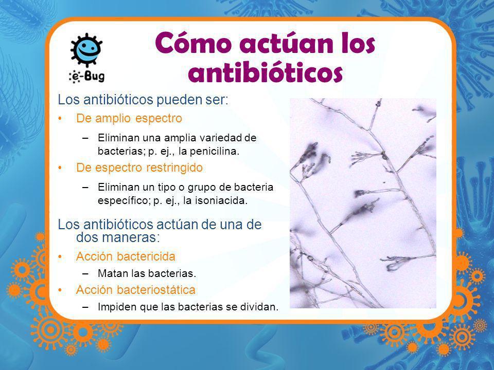 Cómo actúan los antibióticos