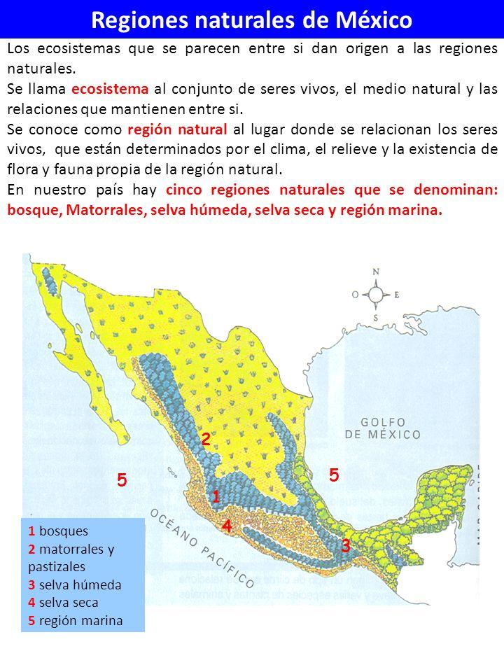 Regiones naturales de México