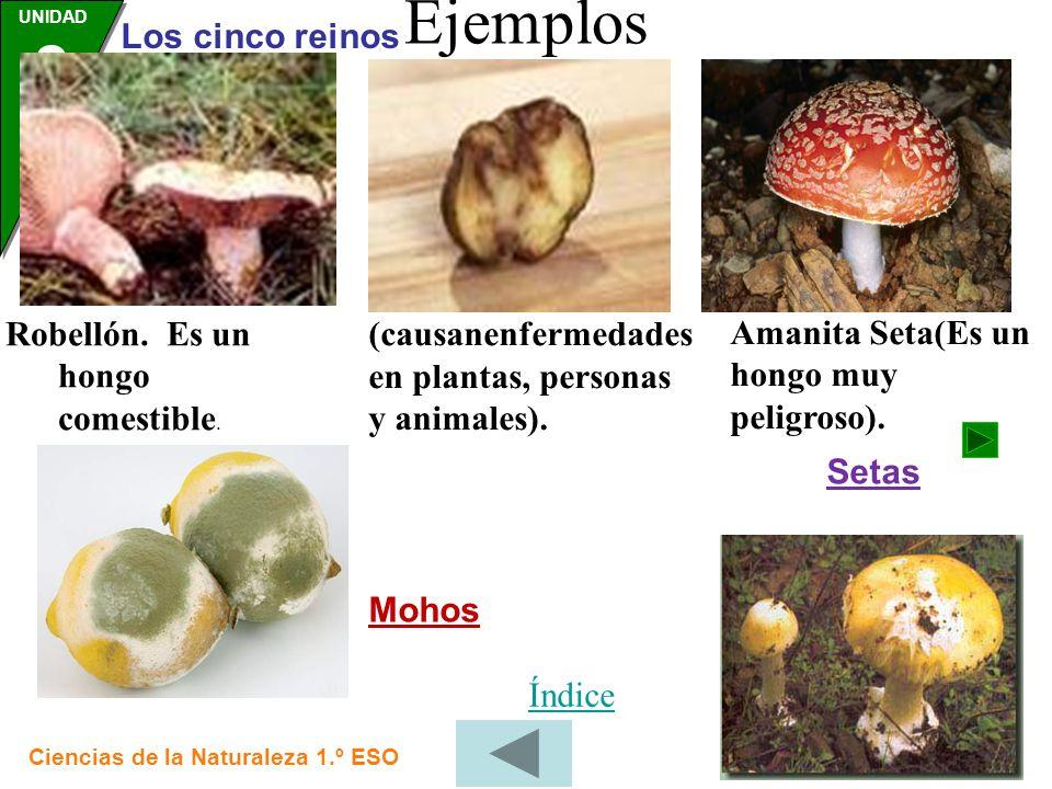 Ejemplos (causanenfermedades en plantas, personas y animales).