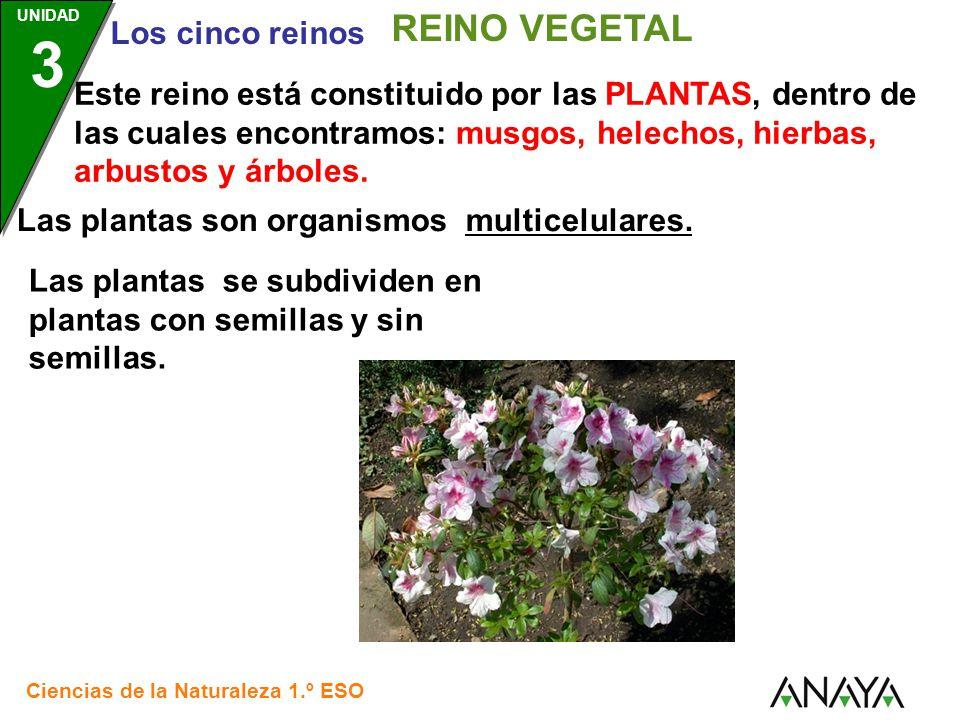 REINO VEGETAL Santillana.