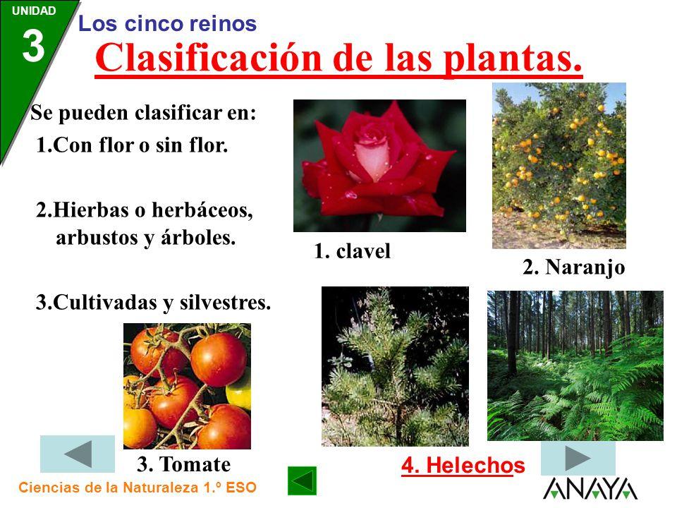 Clasificación de las plantas.