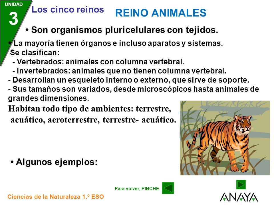 REINO ANIMALES • Son organismos pluricelulares con tejidos.