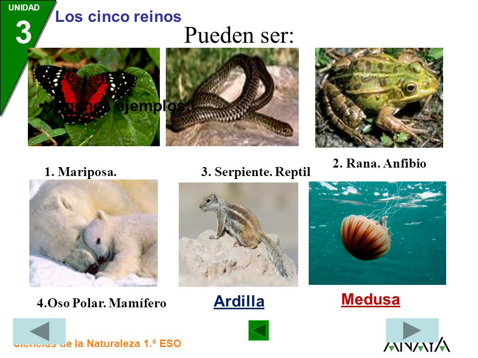 Pueden ser: • Algunos ejemplos: Medusa Ardilla 2. Rana. Anfibio