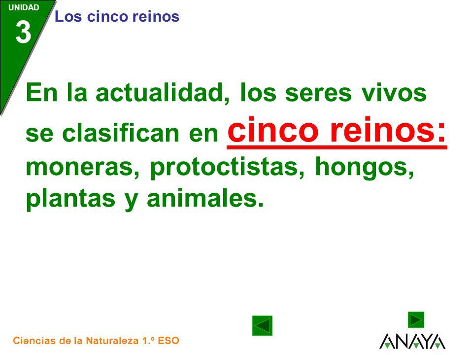 En la actualidad, los seres vivos se clasifican en cinco reinos: moneras, protoctistas, hongos, plantas y animales.