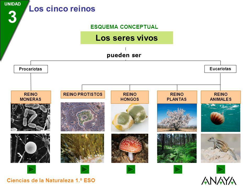 Los seres vivos ESQUEMA CONCEPTUAL pueden ser Eucariotas Procariotas