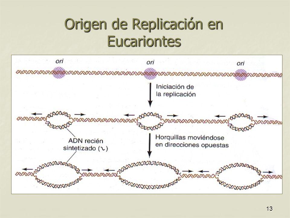 Ciclo Celular Replicacii N Del Adn Ppt Descargar