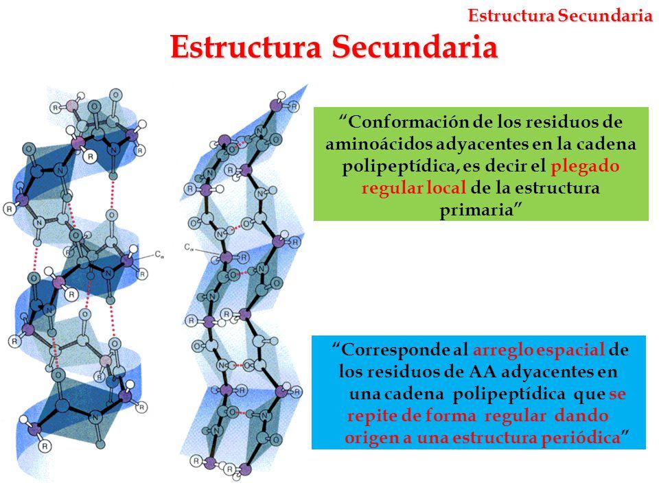 Estructura y Propiedades de Aminoácidos y Proteínas - ppt descargar