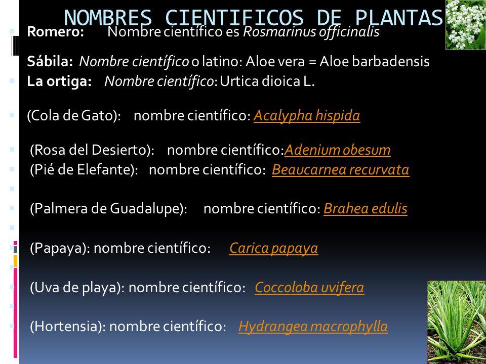 Biodiversidad integrantes equipo 1 salinas lizarraga for Planta ornamental helecho nombre cientifico