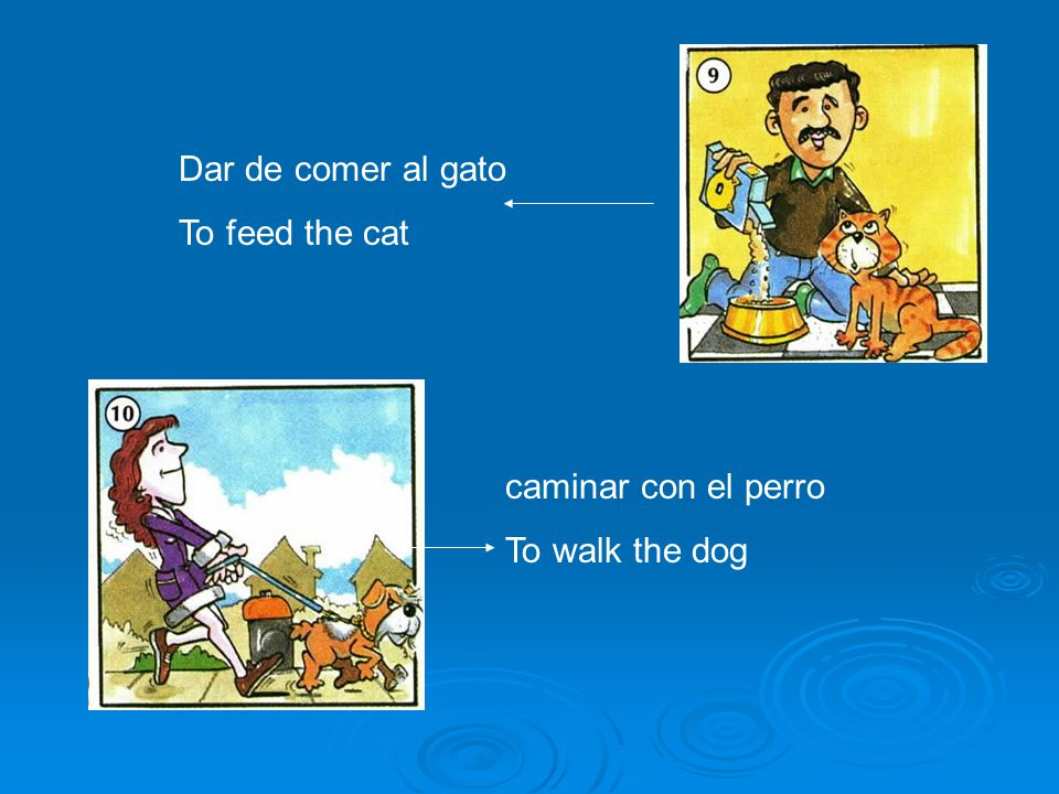 Dar de comer al gato To feed the cat caminar con el perro To walk the dog