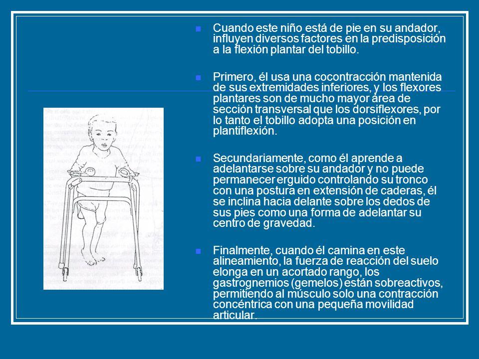 Cuando este niño está de pie en su andador, influyen diversos factores en la predisposición a la flexión plantar del tobillo.